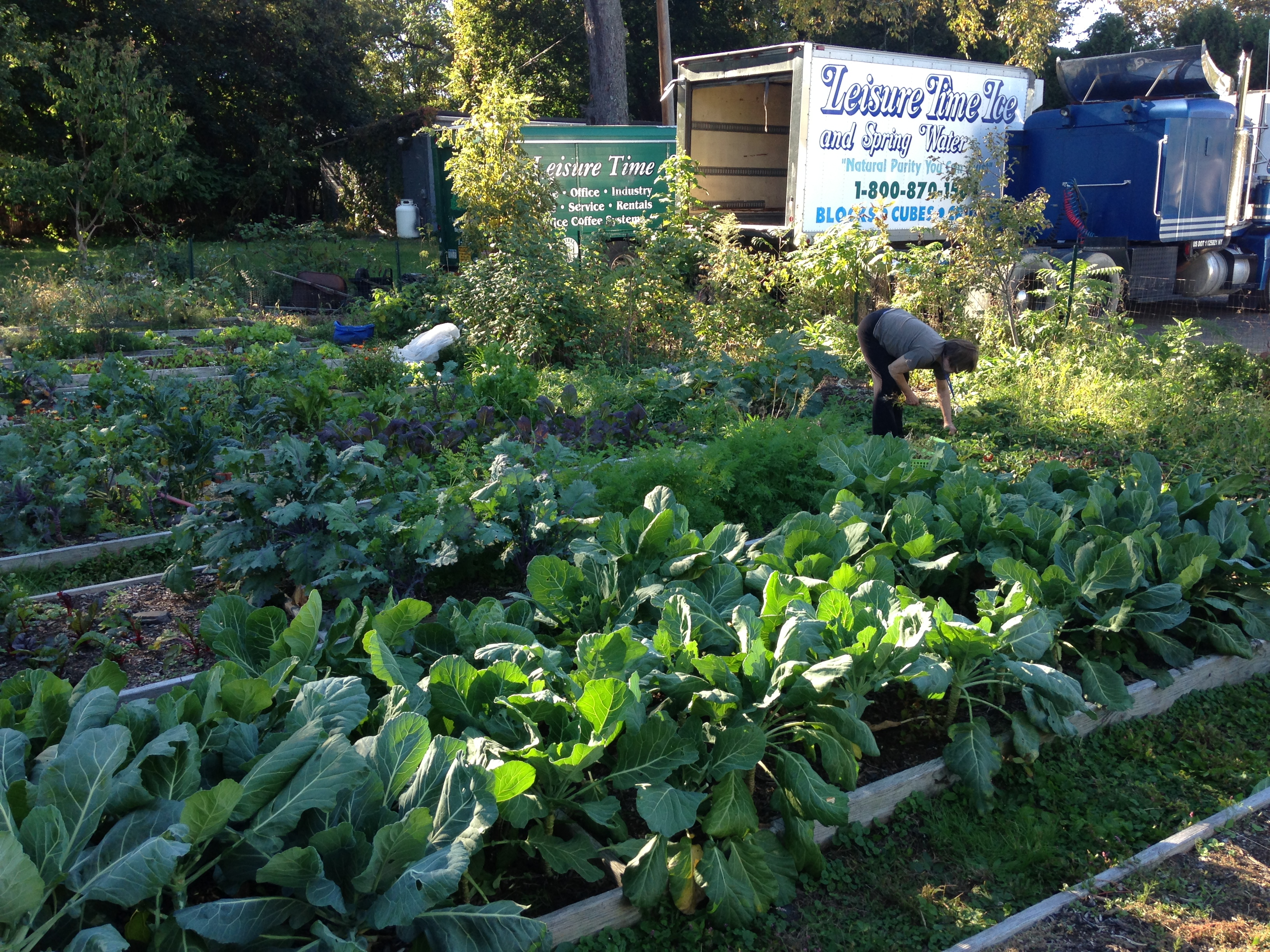 100 Food Rising Mini Farm Grow Ikea Innovative Indoor Farm Grows Greens 3 Times Faster As A